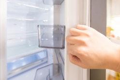 虫が大量にわいた冷蔵庫。害虫の駆除と消毒はどうする?